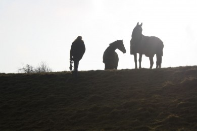Early Morning Silhouette with Cloudy May and Ellie at Top of Parkland - Equine Therapy Center