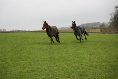 Cloudy May and Copper Bobby Enjoying a Gallop Together - Equine Therapy Center