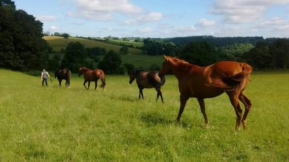ETC - Our Horses