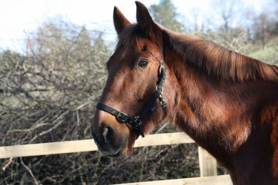 A Happy and interested Copper Bobby - Equine Therapy Center