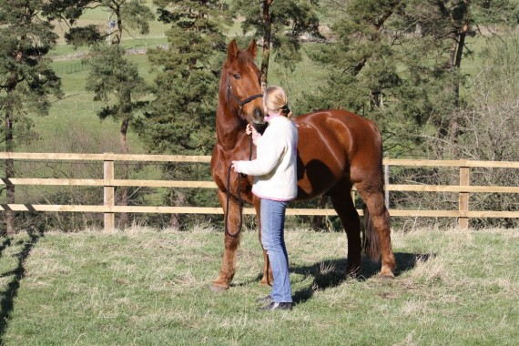Nicky and Copper Bobby sharing a Moment of Mutual Respect - Equine Therapy Center
